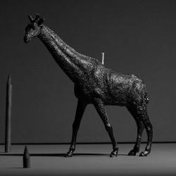 Giraffe X CANDLE