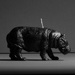 Hippo X CANDLE