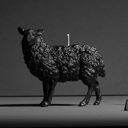 Sheep X CANDLE